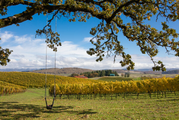 ANDANTE VINEYARD, city of independence