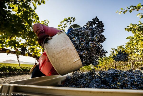 Harvest in Willamette Valley
