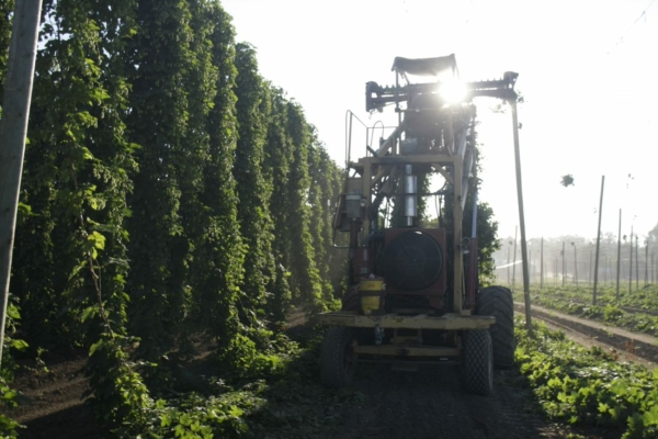 Hops harvest with tractor