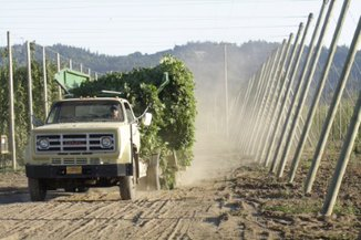 Hops harvest with truck