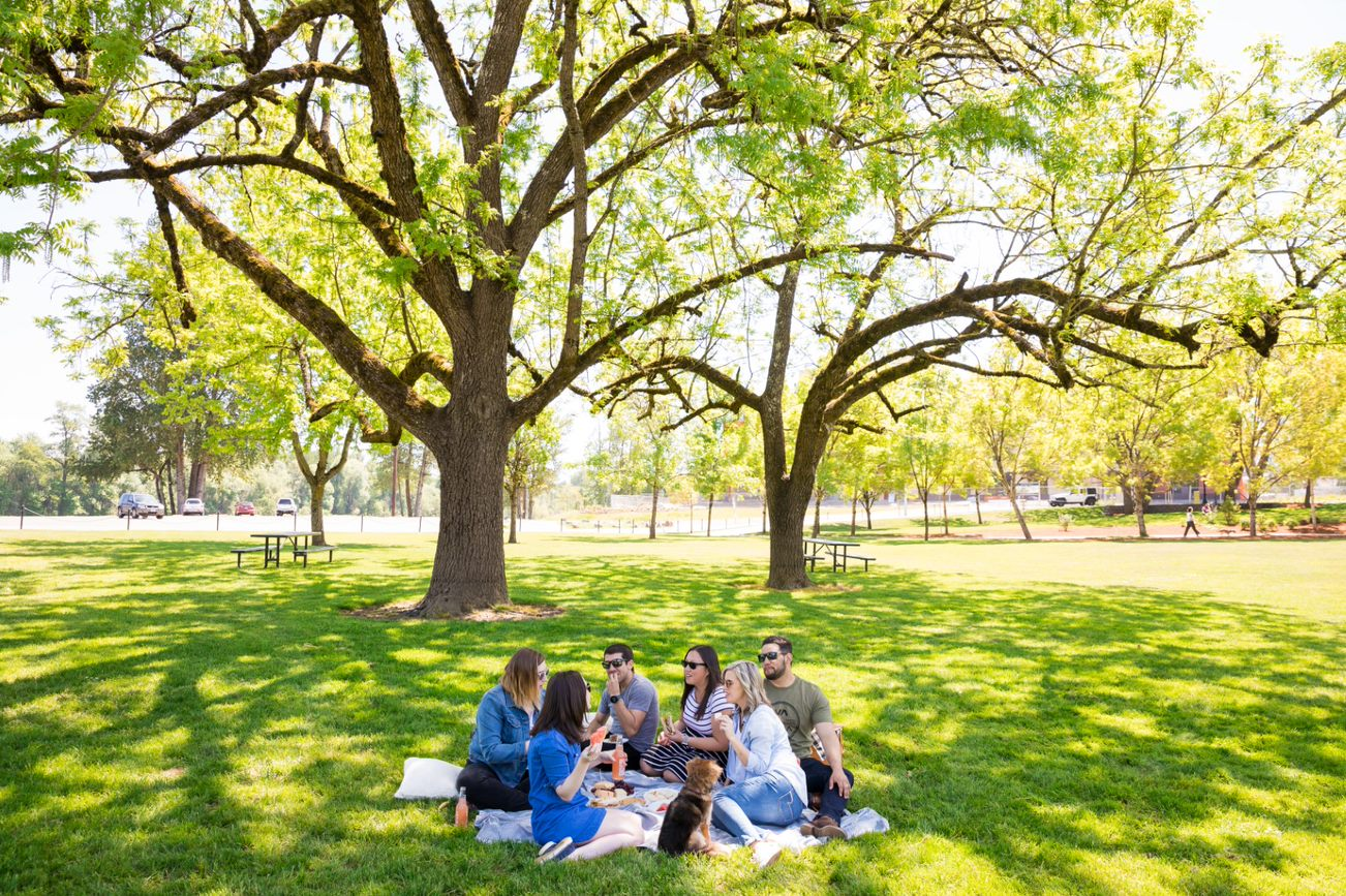 A group of men and women picnicking under a tree