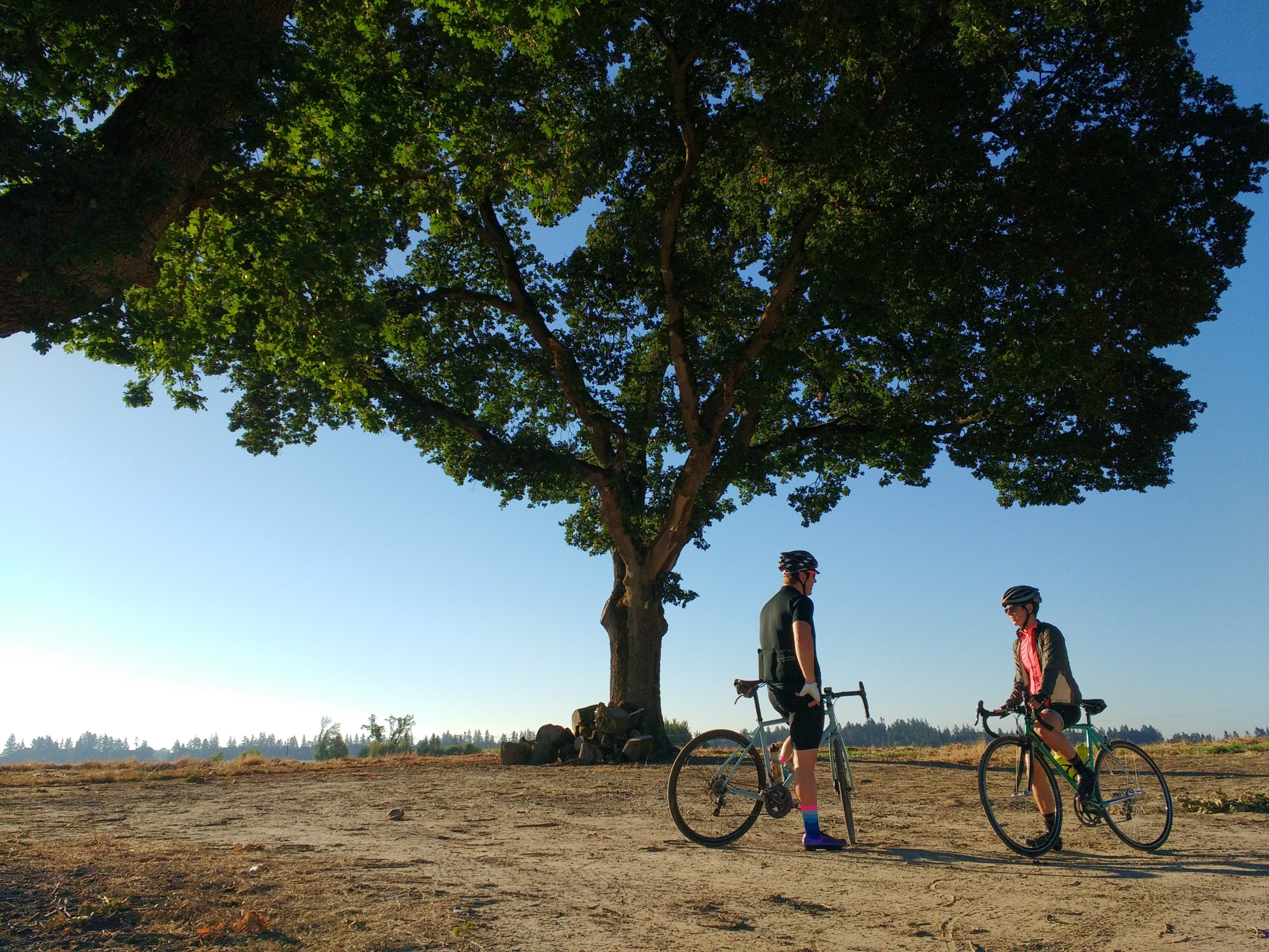 Two bicyclists under a large oak tree